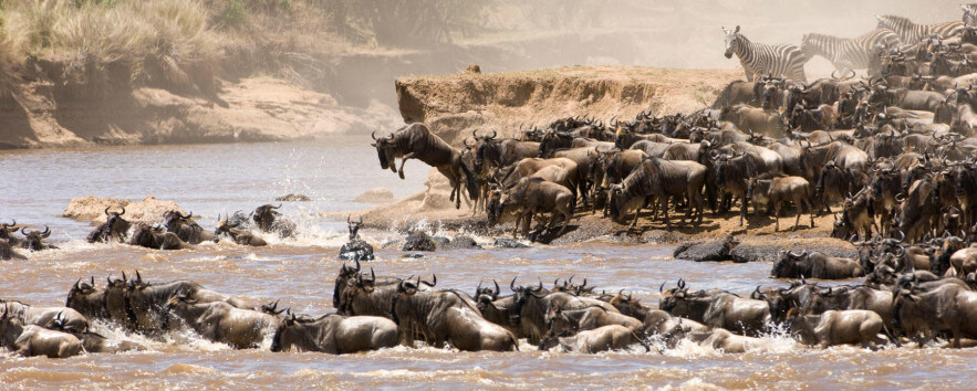 Masai Mara Migration Safari